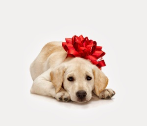 dog-gift5